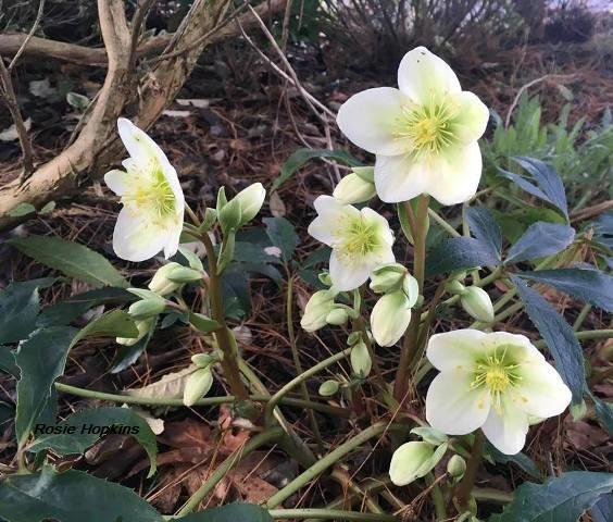 Spring flowers Rosie Hopkins