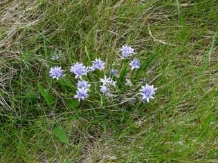 wild flowers Hoxa Head credit: Bell