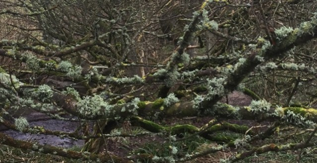 lichen Happy Valley