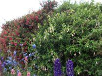 garden flowers credit Bell