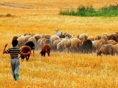 Golestan, Iran - Gorgan, Autumn in Toshan Village
