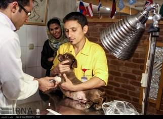 Tehran, Iran - Veterinary Hospital in Tehran 16