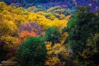 Golestan, Iran - Gorgan, Alangdare Forest 11