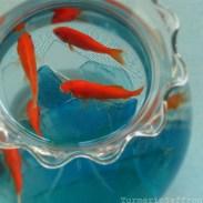 Mahi Ghermez (Goldfish) - Representing life