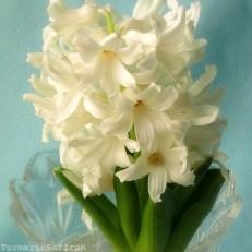 Sonbol (Hyacinth) - Representing spring