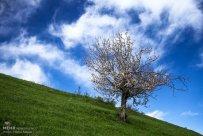 East Azerbaijan, Iran - Kaleybar in spring 20