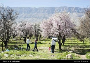 First spring signs in Shiraz - Fars Province, Iran - (Photo credit: Amir Sadeghian / Jamejam Online)