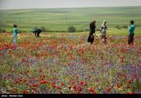 Ardabil, Iran - Spring days across Ardabil Province 34