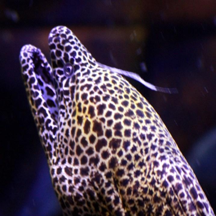 Atlantis Hotel - Moray Eel - my least favourite sea creature