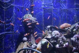 Atlantis Hotel - a whole tank full of Nemos