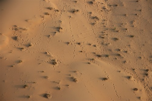Camel tracks. Sadly we didn't see any camels from the air. We did see a number from the bus!