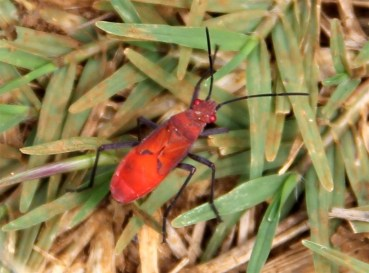 A red bug