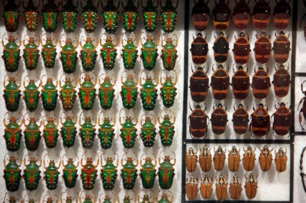 Pretty bugs all in a row