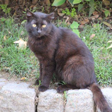 The obligatory cat photo