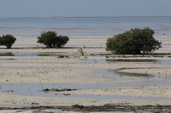 Mangroves near Al-Jemail