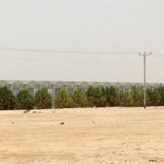Roza Hassad really is in the desert - the surrounding countryside is like this as far as the eye can see.