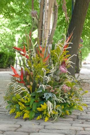 Australian Flowers!