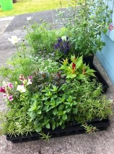 Plants for seaside gardens.