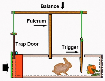 Build Your Own Rabbit Trap