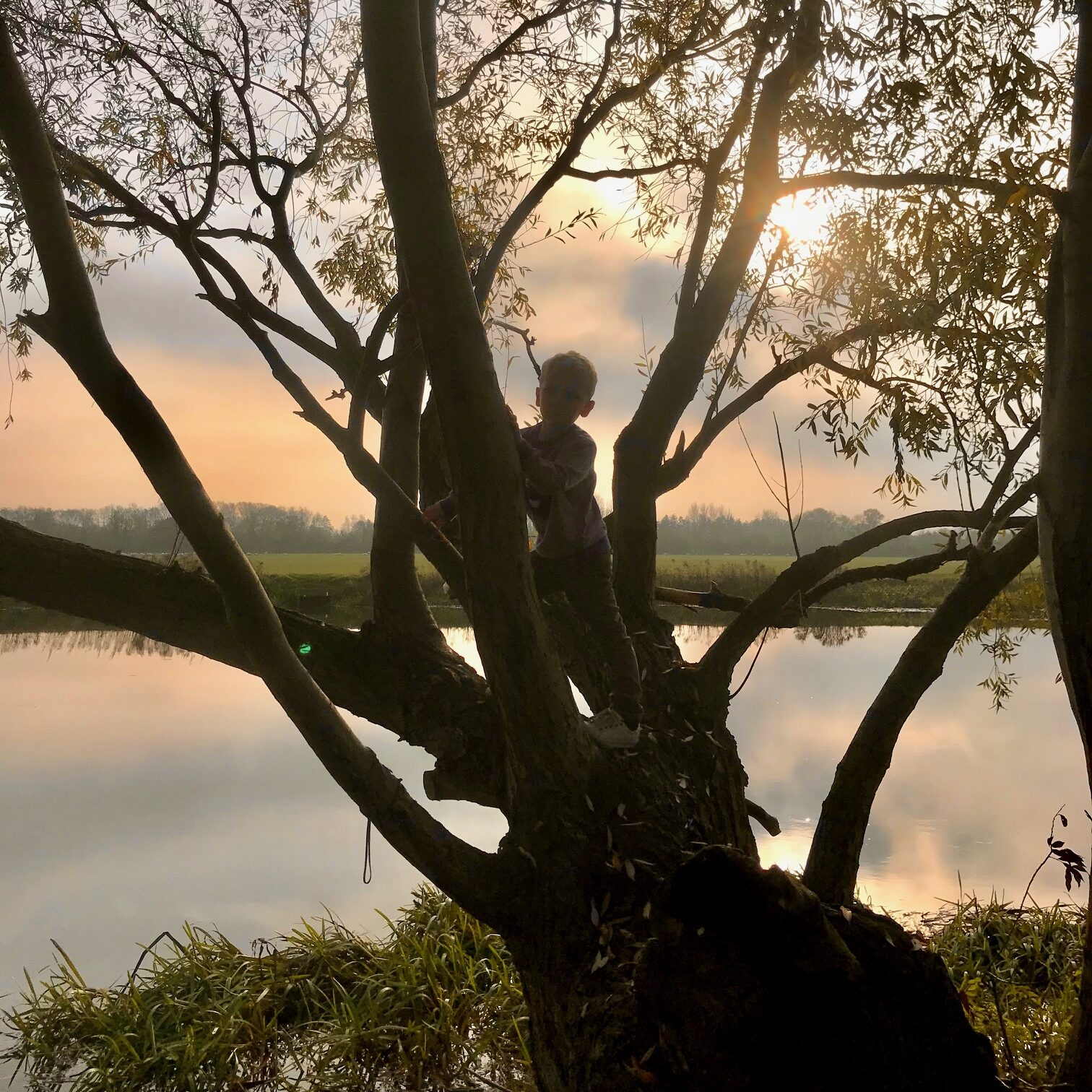 11 tips for climbing trees with kids