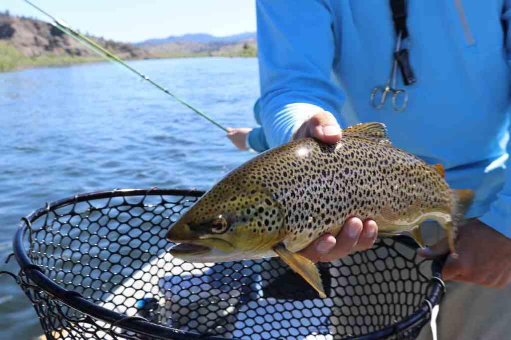 Trout Fishing Basics