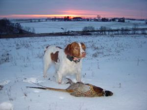 Cheka with a Pheasant