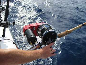 Electric Reel for Tilefish
