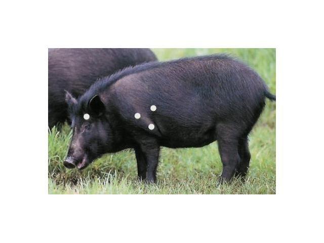 Hog Shot Placement