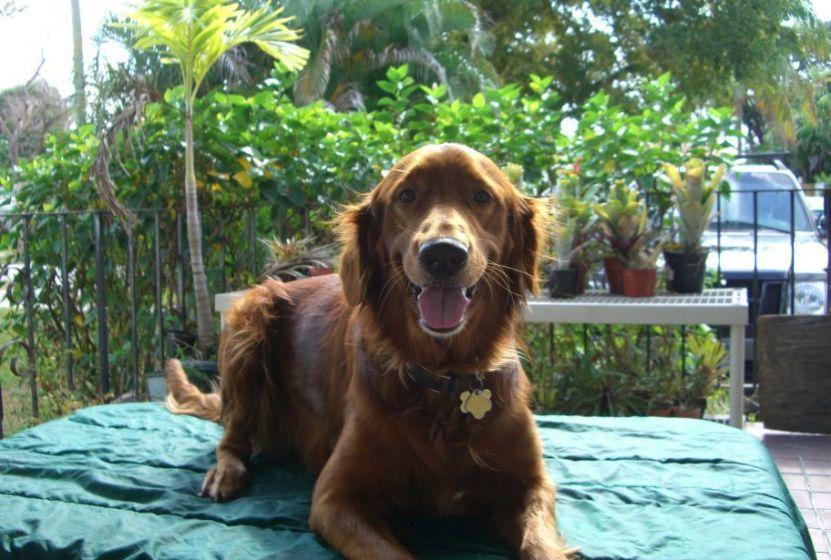 best Hiking dog