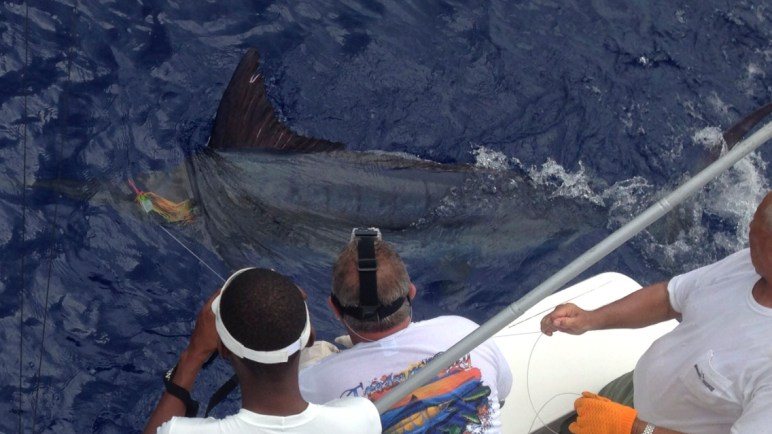 Treasure Cay Blue Marlin