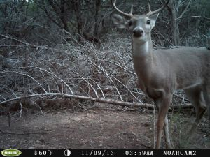 A nice 6 point Buck came a calling, used a Moultrie trail cam for this pic