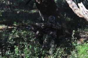 Turkey hunting Camo