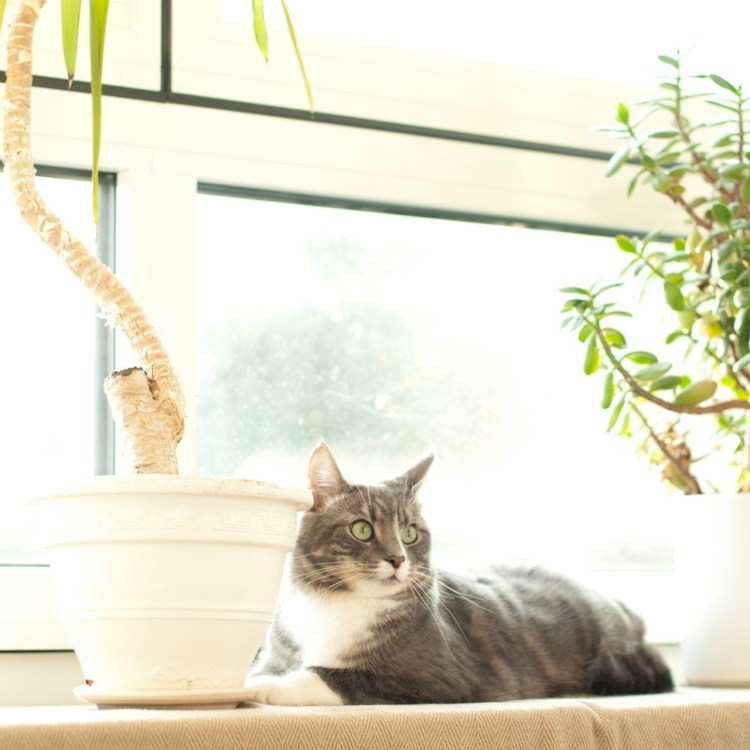 Photo of cat laying in bright natural window light