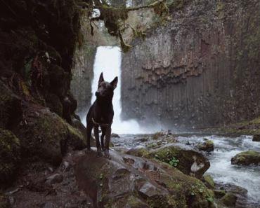 dog enjoying a hike