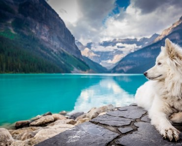 Fluffy white dog sitting on a cliff in Canada