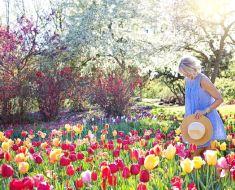 DIY: Garden Ideas