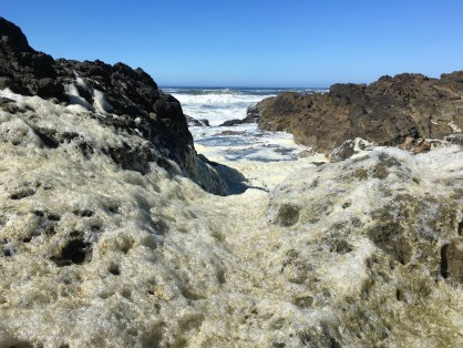 Sea foam, spume, is the product of phytoplankton breakdown