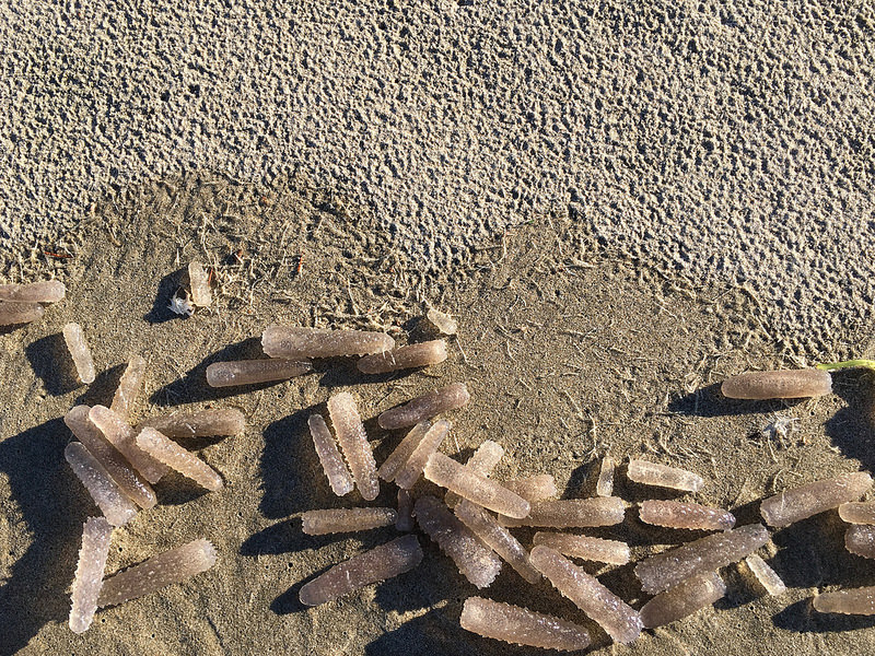 A drift line littered with pyrosomes | December