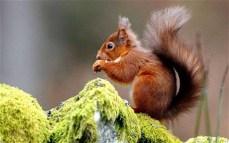 bookersquirrel_1809278c