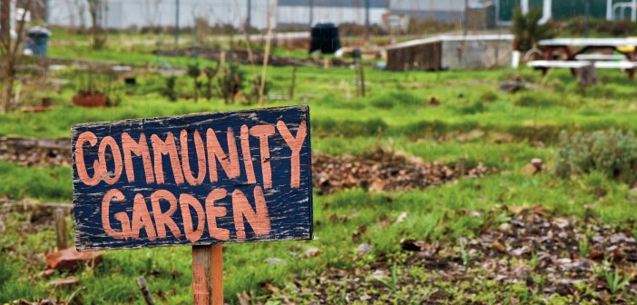 Community Gardens Dominate This Year S Eastern Health
