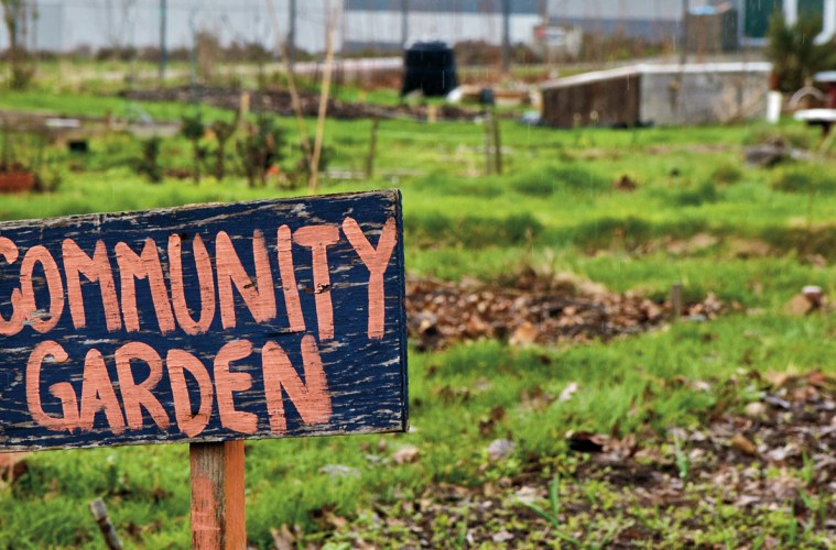 Community Gardens Dominate This Year\'s Eastern Health Community ...