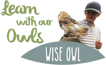 Owl education programmes