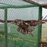 Monty in Flight