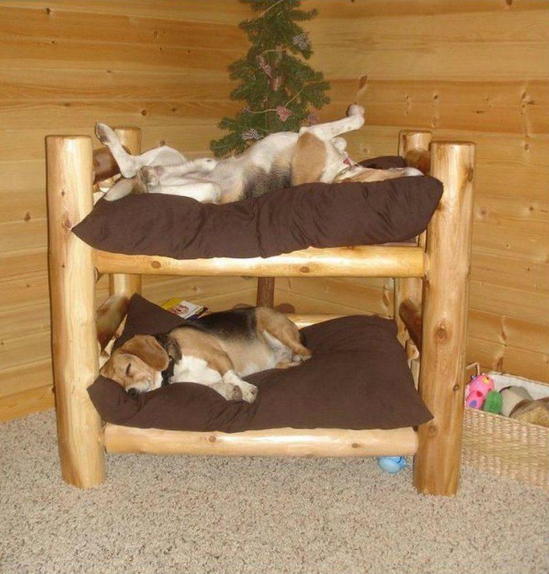 Cute Dog Bunk Beds Novocom Top