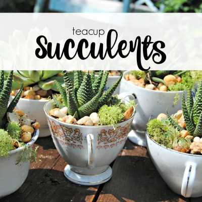 Succulent Tea Cups & a free printable