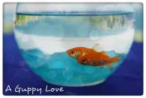 A Guppy Love
