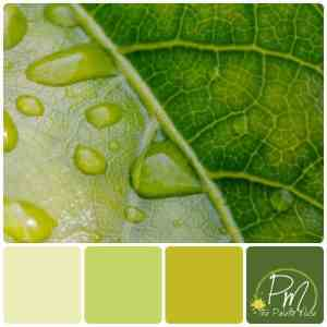 A single green leaf holds a whole spectrum of green hues.