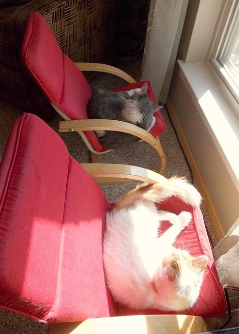 Happy cats sunning in the window.