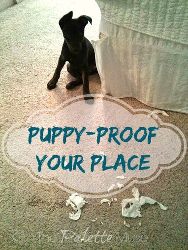 Puppy Proof Your Place, quick and easy tips to save your sanity and your carpet! ThePaletteMuse.com