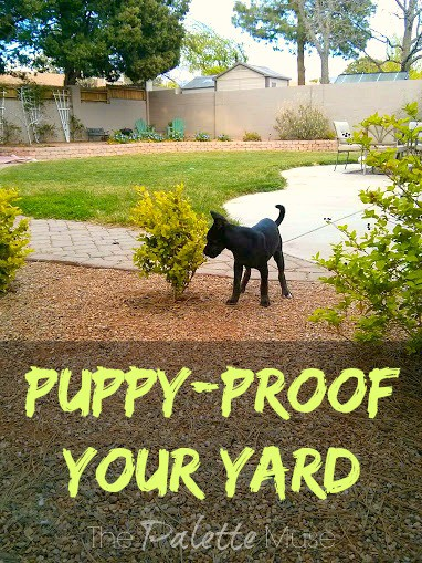 Puppy Proof Your Yard: Keep your new puppy safe from harm while exploring the great outdoors. ThePaletteMuse.com